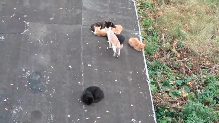 伺いを立てる猫