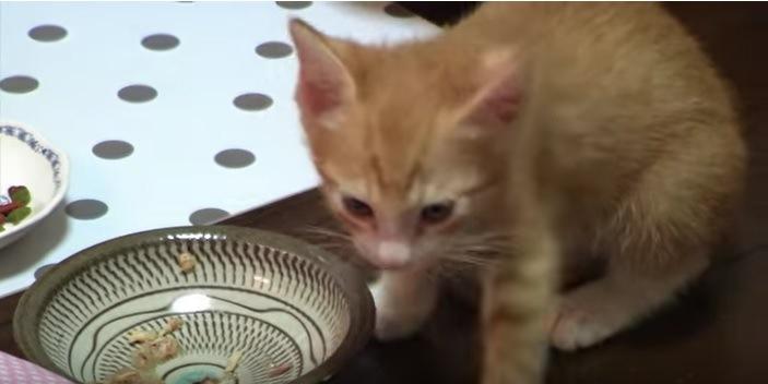 ごはんを食べ終えた猫