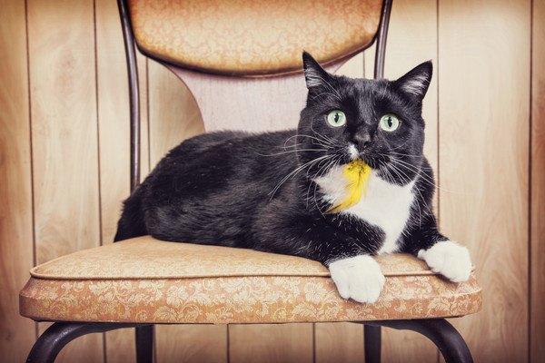 黄色のものをくわえた黒白の猫