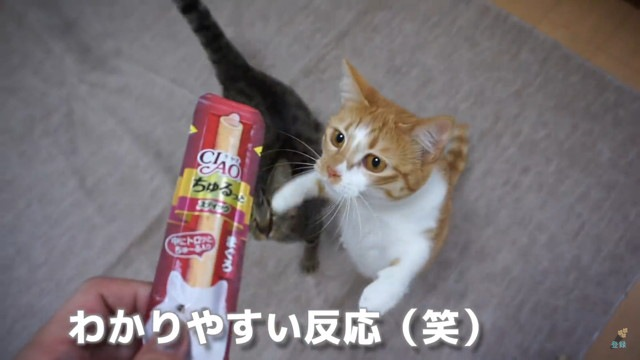匂いを嗅ぐ猫
