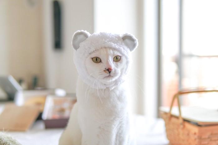 仮装した白猫