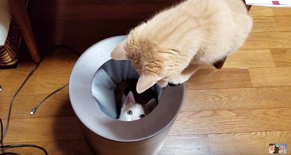 丸い箱の中に子猫発見