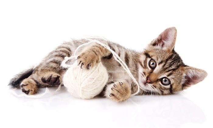 毛玉ボールと猫