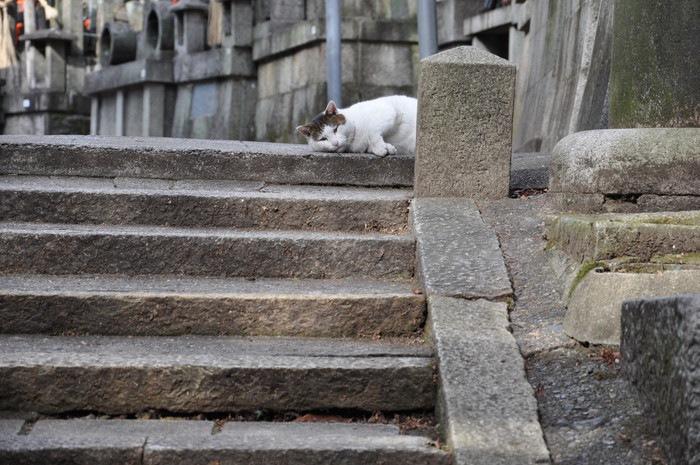 猫スポット伏見稲荷大社にいる猫