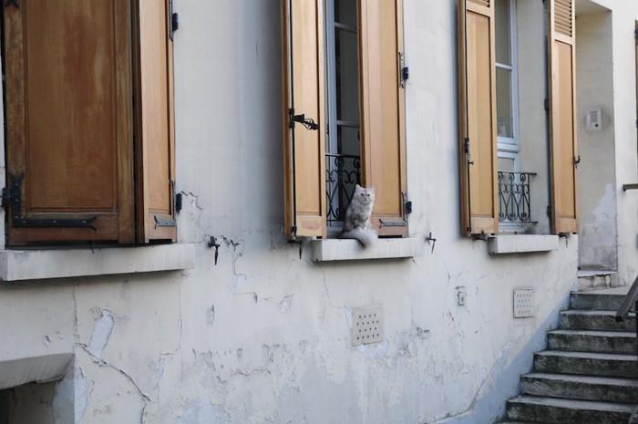 住宅街でくつろぐ猫