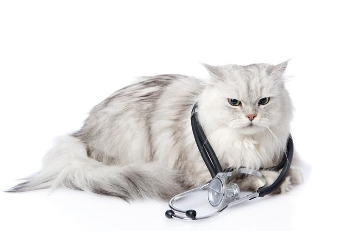 聴診器を首にかけたペルシャ猫