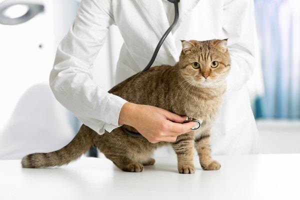 お医者さんと猫
