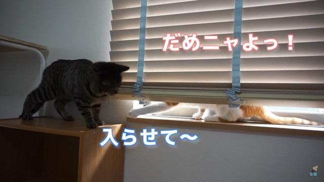 拒否する猫