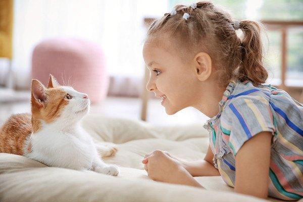 茶色と白の猫と少女