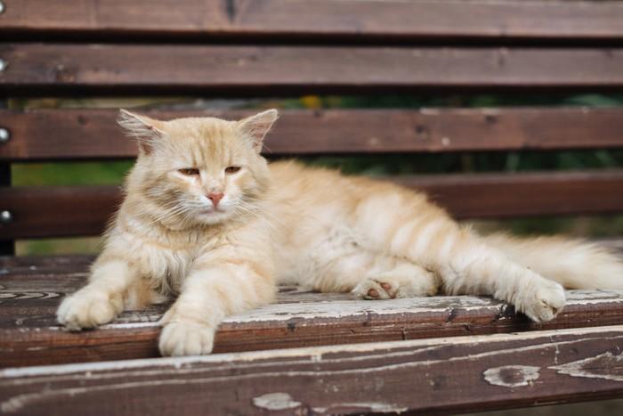 ベンチでしょんぼりする猫