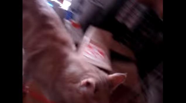 画面から外れかかる猫