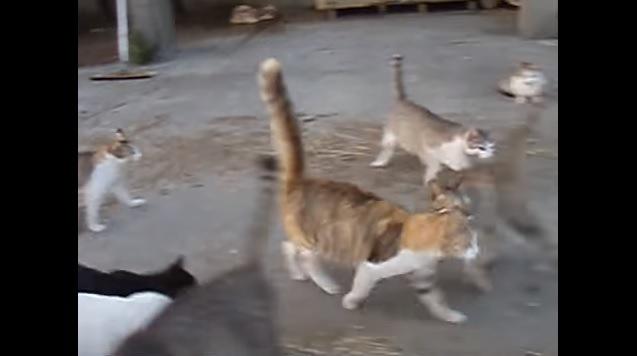 右方向へとUターンする猫達