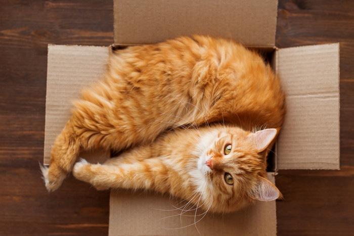 箱にぴったりはまる猫の写真
