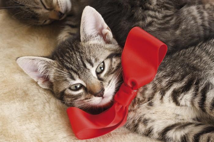 赤いリボンをした子猫