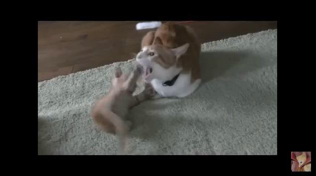 子猫に噛みつく成猫