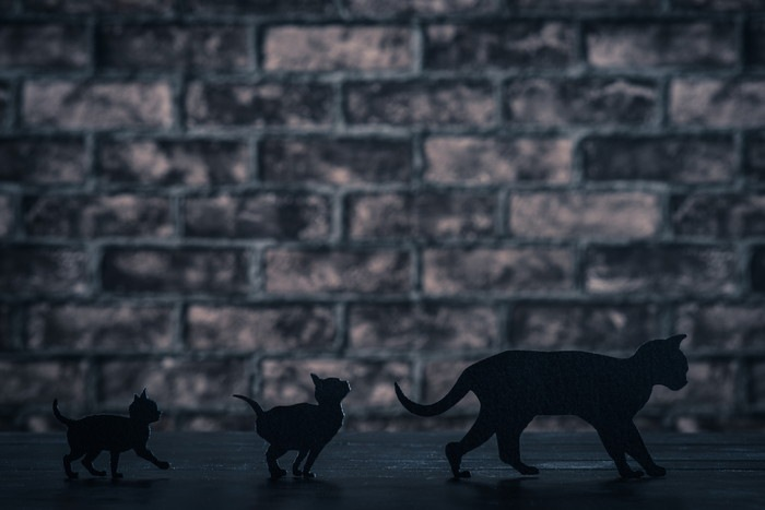黒猫親子のシルエット
