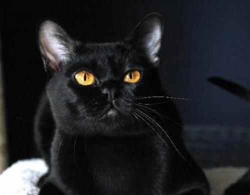 黒いマンダレイ