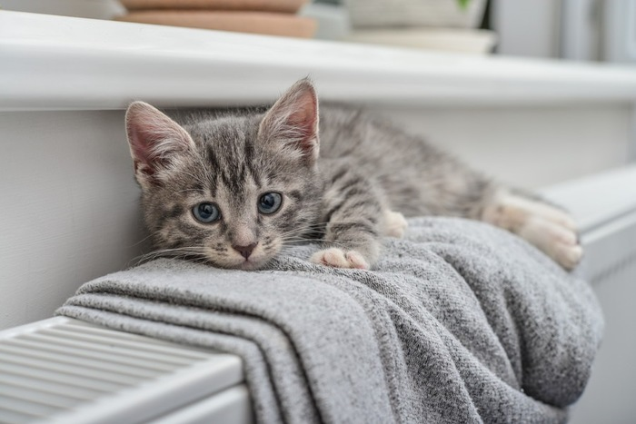 ヒーターの上にいる猫