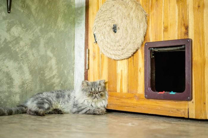 キャットドアの前でくつろぐ猫