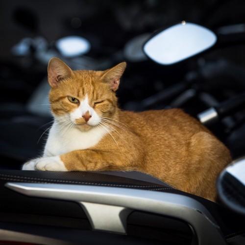 バイクに座っている猫
