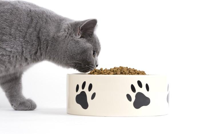 餌に顔を近づけている猫