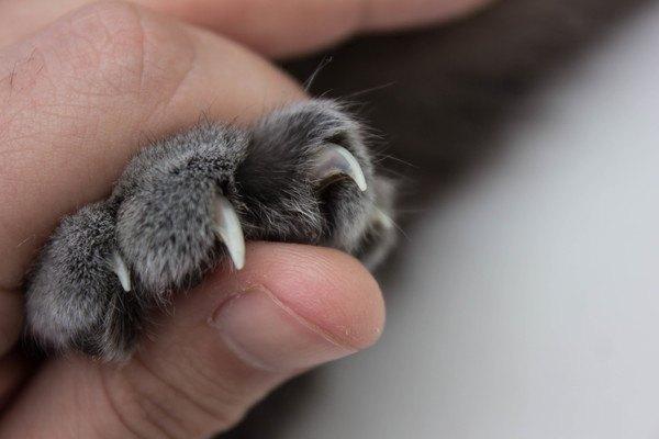猫の爪を出させる