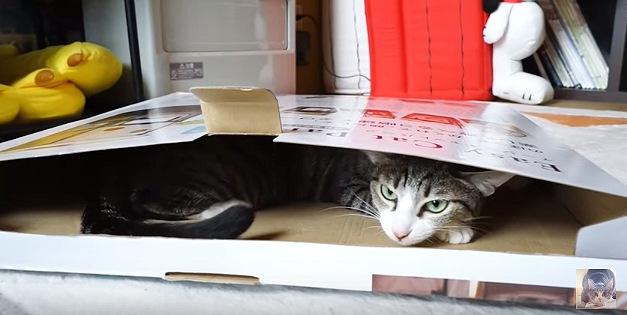 厚みの薄い箱に収まる猫