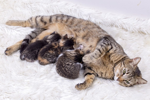 #母猫を囲む子猫#