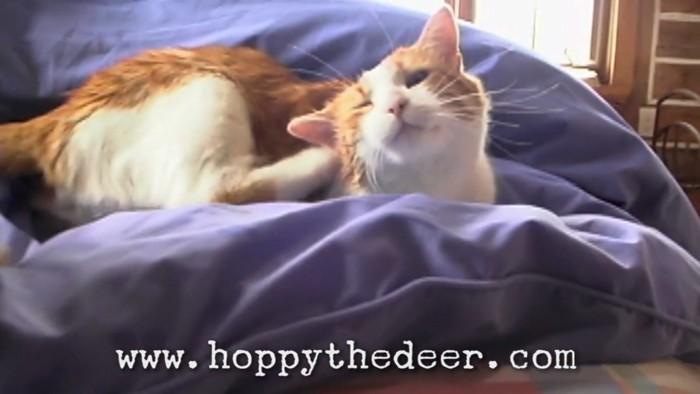 くすぐったそうな猫