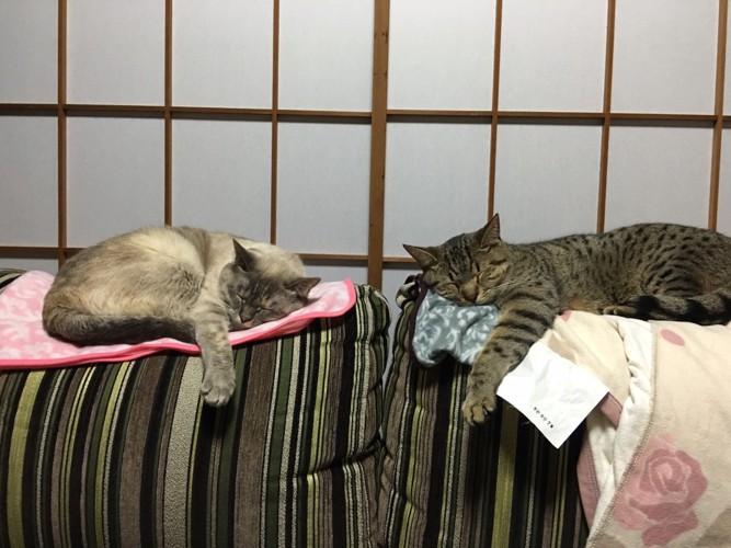 障子の前で寝る猫2匹