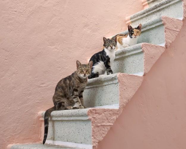 階段にいる3匹の猫