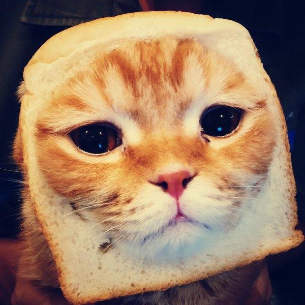 食パンに顔をはめこんだ猫