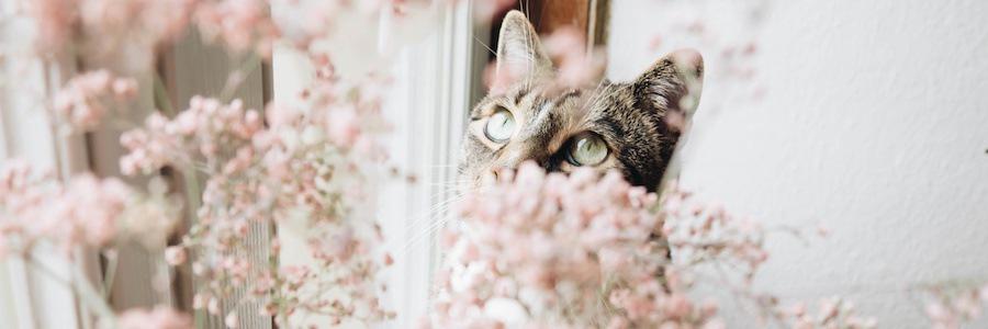 窓から外の花を見つめる猫
