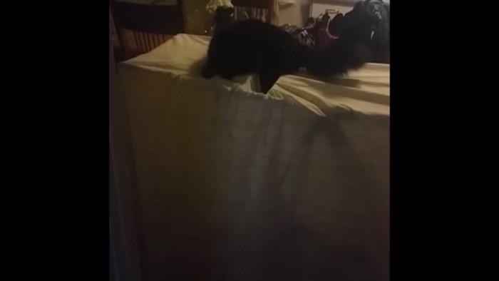 物干しに乗る猫