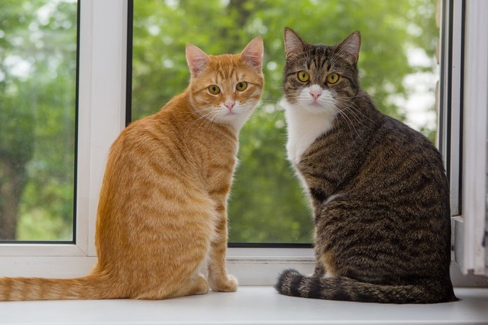 窓辺で振り返る2匹の猫