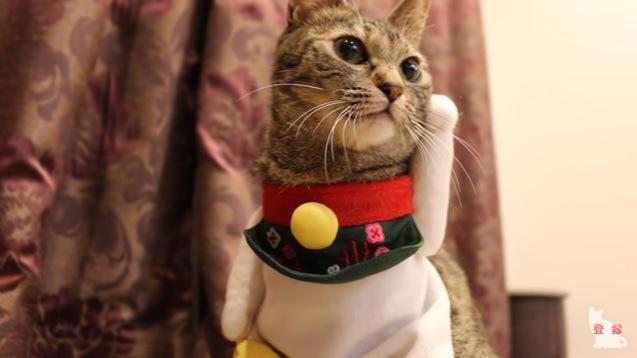 招き猫の服を着た猫(正面)