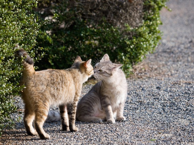 道で挨拶する二匹の猫