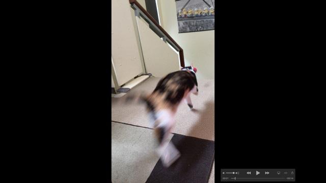階段をかけ降りる猫
