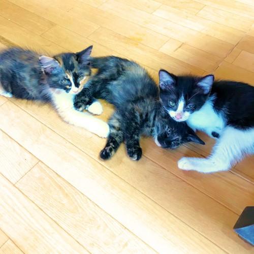 子猫3匹の写真