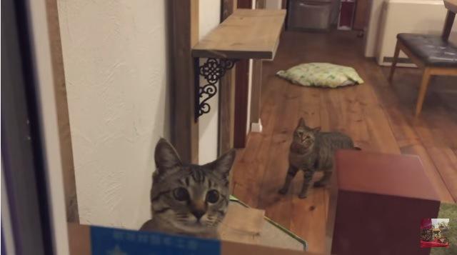こちらを見る2匹の猫