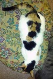 珍しい柄猫13