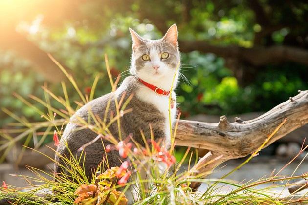 #離れている猫#