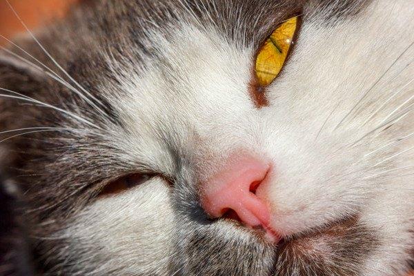 猫の鼻のアップ