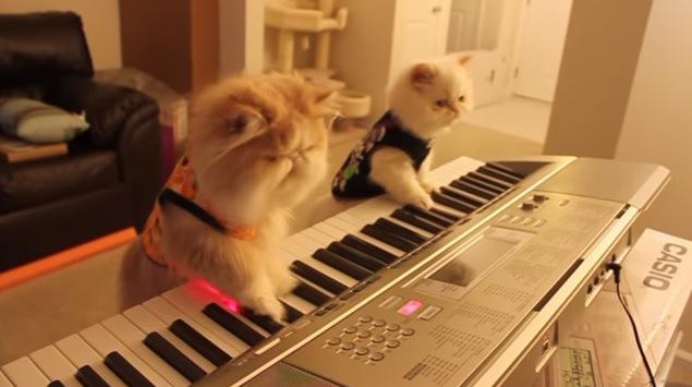 鍵盤を弾く猫たち(左斜めから)