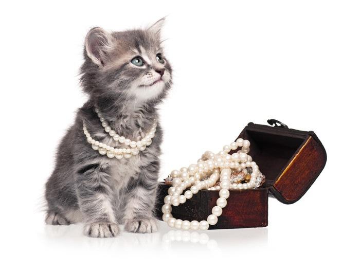 子猫とアクセサリー