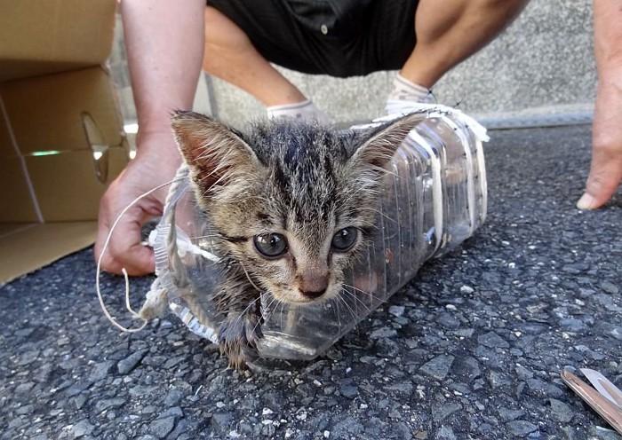 ペットボトルに入っている救出されたココちゃん