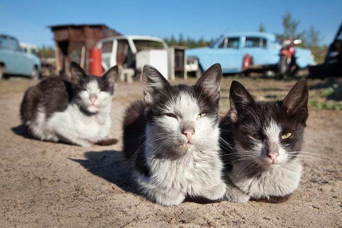 険しい表情の三匹の猫
