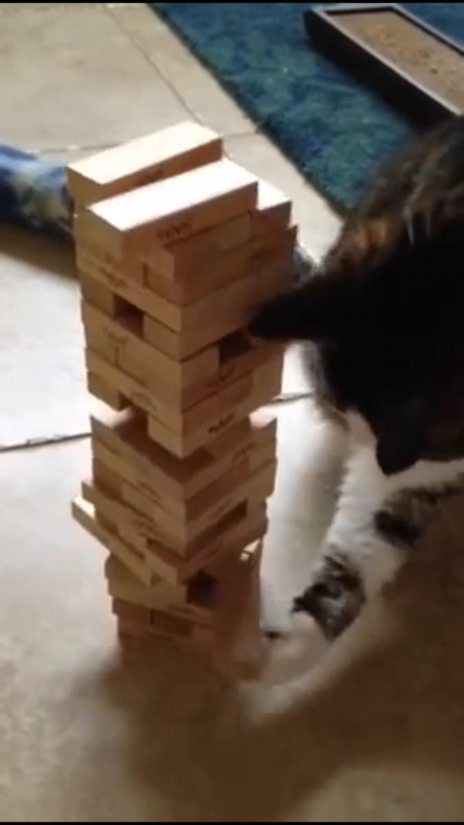 前足でとる猫