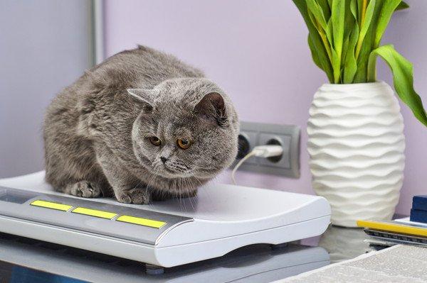 電気製品の上に乗る猫