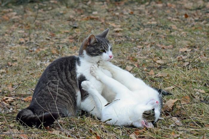猫を拒否する猫